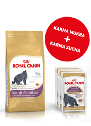 ROYAL CANIN FELINE BREED BRITISH SHORTHAIR ZESTAW