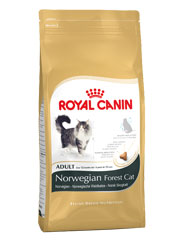 ROYAL CANIN FELINE BREED NORWEGIAN ADULT